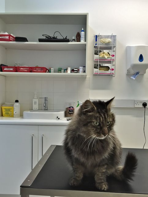 It seems I have a bit of a feline fever & a wheezy chest.... I got a dose of cat flue. Had an anti-bio injection
